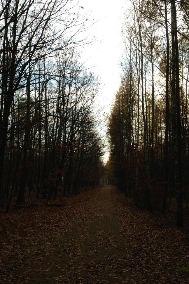 November Hike in Podyjí National Park