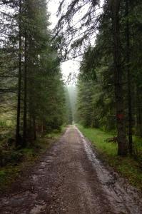 A Twilight Stroll