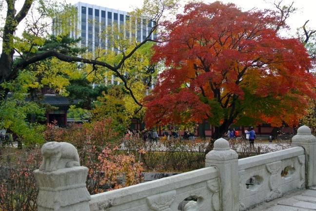 The Most Vibrant Tree, Changgyeong Palace