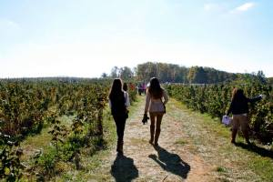 Strolling through the Apple Orchards