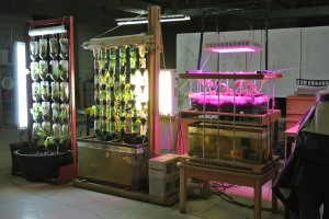 Aquaponics in a Revitalized Shoe Warehouse