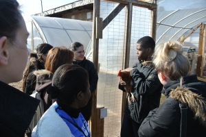 Being Introduced to Chickens by Chicago Youth Volunteers at Growing Power