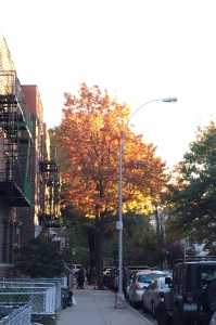 Fall in Astoria