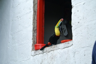 Colombia Toucan