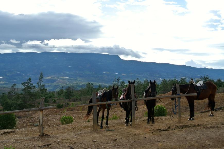Horses in Villa de Leyva