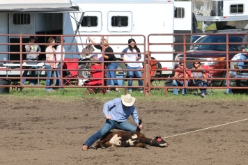 Cow Roping Rodeo