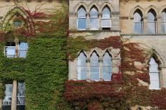 Oxford Ivy